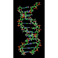 The structure of a section of DNA