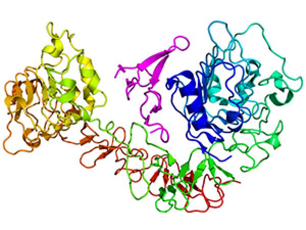 Overcoming Drug Resistance: The EGFR Enigma