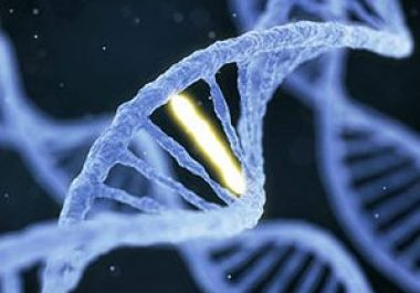Researchers Discuss Disruption to DNA Damage Control