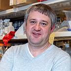 Sergei I. Grivennikov, PhD