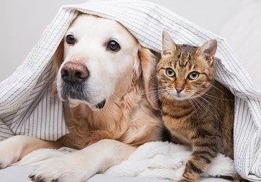 Patients With Pets