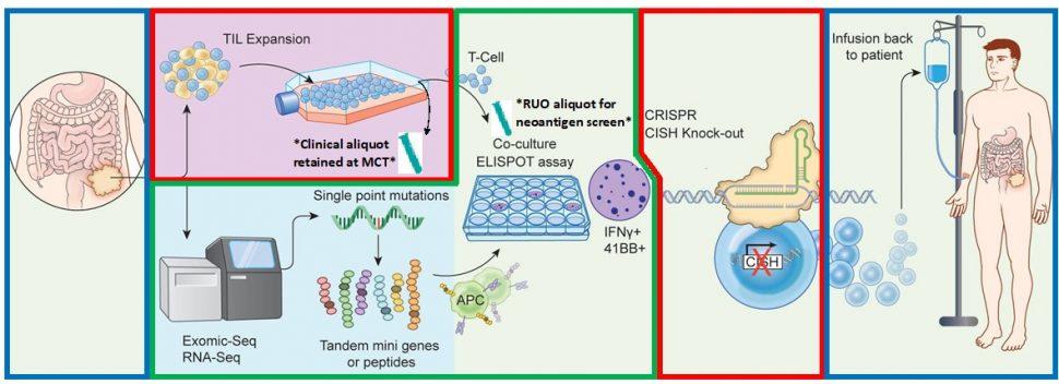 graphic shows CRISPR process